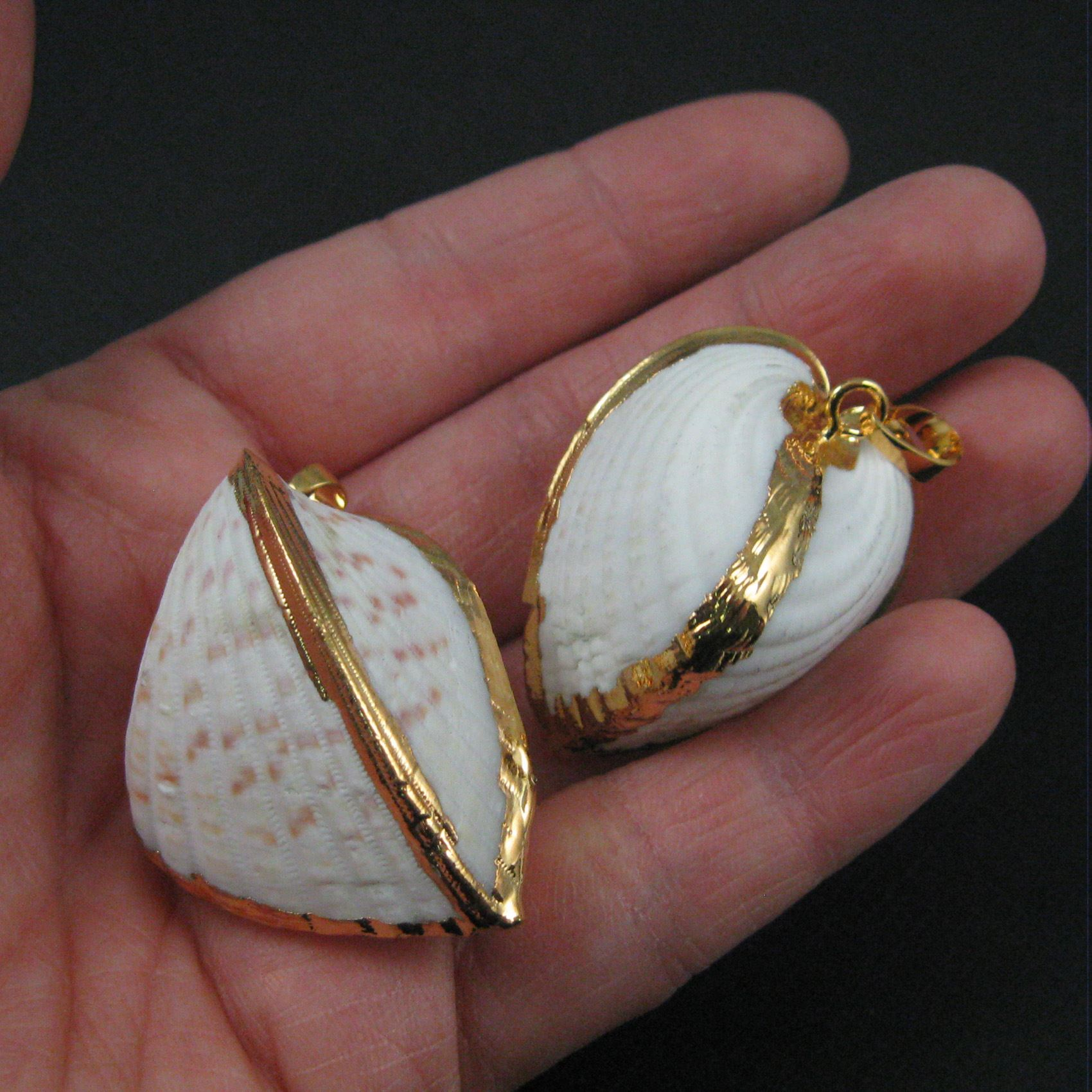 Genuine Shell Pendant, Coquina Gold Wrapped Shell Pendant,Natural Shaded Closed Coquina Shell with Gold Wrapping
